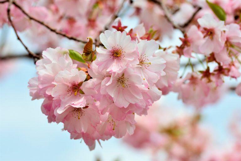 Read more about the article Conheça os cuidados essenciais para curtir a primavera com a saúde