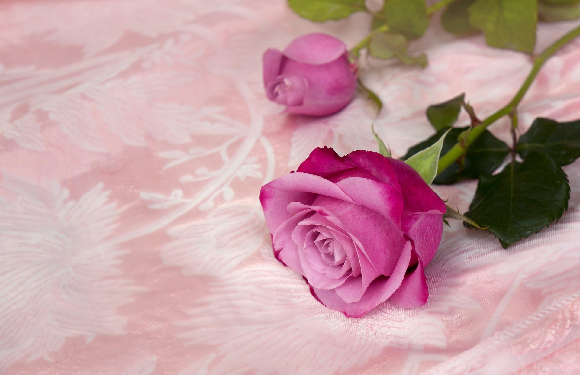 Rosa a cor do empoderamento feminino